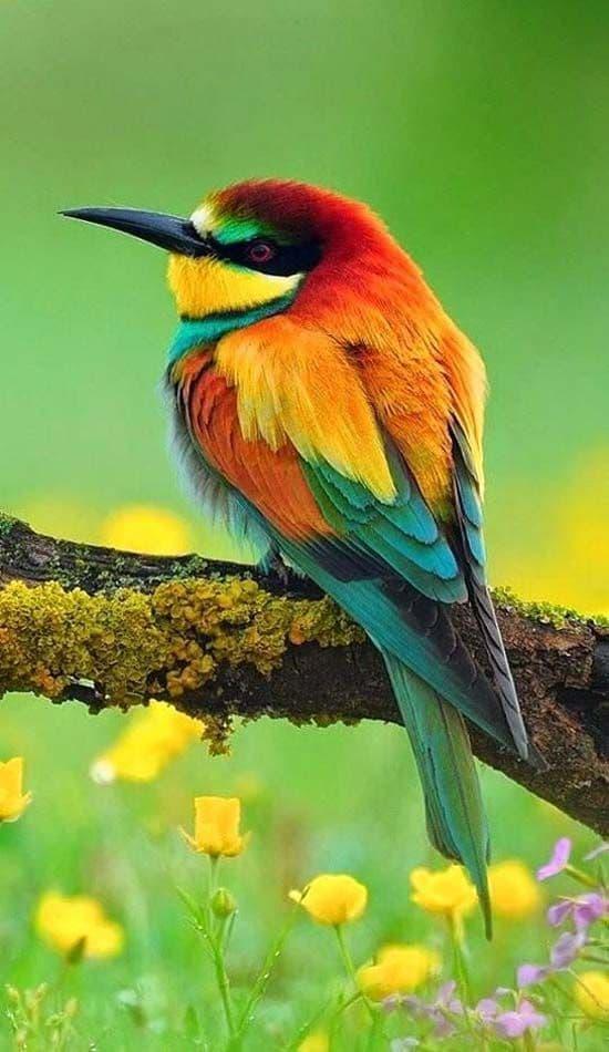 Sid Mohamed Raised By Birds