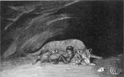 Shamedo The Wolf Boy