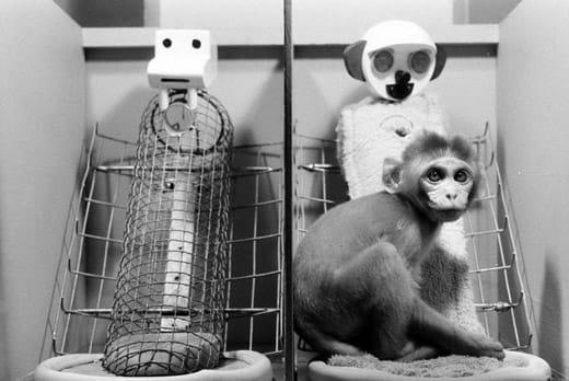 Harlow's Monkey