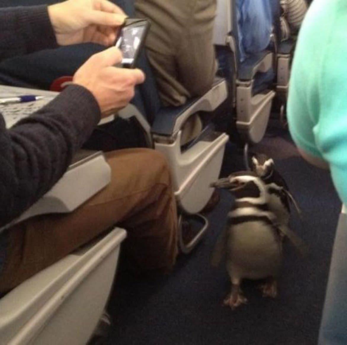 Penguin Time